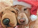 Christmas Golden Retriever and Friend