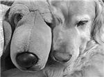 Golden Retrievers Monochrome Photography