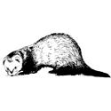 Hand Sketched Ferret T-shirt