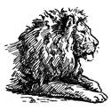 Hand Sketched Lion