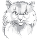 Persian Cat Illustration