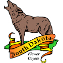 South Dakota Coyote