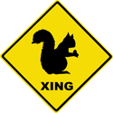 Squirrel Crossing