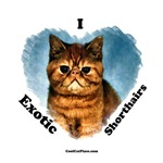 I (heart) Exotic Shortair Cats