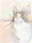 Pedigreed Cats