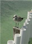 Lonely Bird (Isla Mujeres)