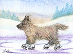 Cairn terrier ice skating