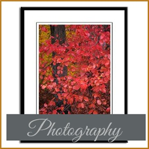 Photograph Gallery & Gifts