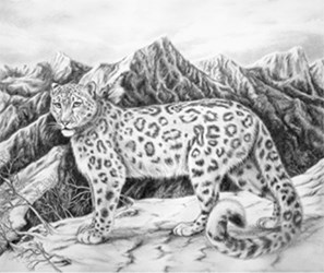 Snow Leopard by Marc Brinkerhoff