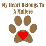 My Heart Belongs To A Maltese