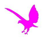 Pink Landing Eagle Silhouette