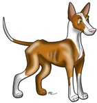 Ibizan Hound Products
