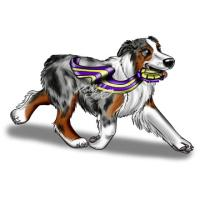 Australian Shepherd Products