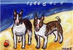 BULL TERRIERS at the beach