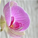 Orchid Floral