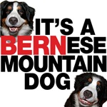 It's a Bernese Mountain Dog