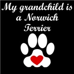 Norwich Terrier Grandchild