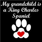 King Charles Spaniel Grandchild