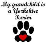 Yorkshire Terrier Grandchild