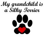 Silky Terrier Grandchild