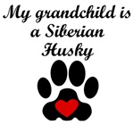Siberian Husky Grandchild