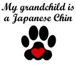 Japanese Chin Grandchild
