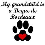 Dogue de Bordeaux Grandchild
