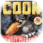 Raccoon Sweet Potato