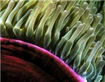 Marine Life Abstracts