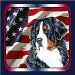 Bernese Mountain Dog USA Flag Design