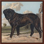 Antique Mastiff Dogs