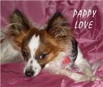 PAPILLON/SMALL DOG LOVERS