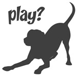 play? Labrador Retriever