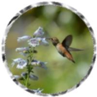 Hummingbird merchandise