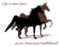 American Saddlebred Fun