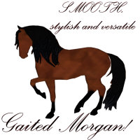 Smooth Stylish and Versatile, Gaited Morgan