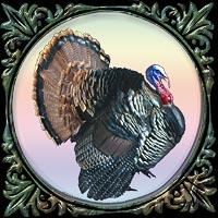 Thanksgiving Shop
