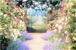 Garden Gate & Flowers