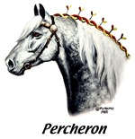 Percheron Draft Horse