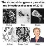 Hillary parasite