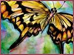 Swallowtail butterfly art