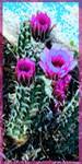 Cactus, southwest desert  art!