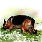 Schutzhund-German Shepherd