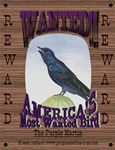 Purple Martin FUN & comedy