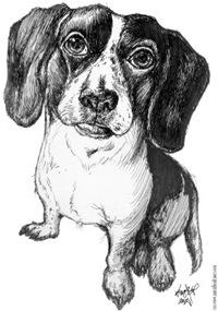 Solomon Perry's Cute Dog
