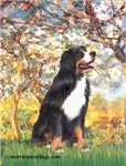 SPRING<br>& Bernese Mountain Dog
