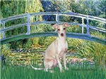 LILY POND BRIDGE<br>Italian Greyhound