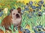 IRISES<br>& English Bulldog (Brown/white)