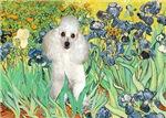 IRISES<br>& White Poodle (Toy/Min)
