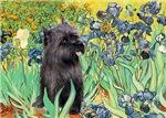IRISES<br>& Brindle Cairn Terrier